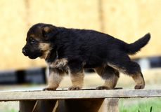 Filhote de cachorro no banco Fotos de Stock Royalty Free