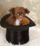 Filhote de cachorro no chapéu superior Fotos de Stock Royalty Free