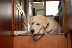 Filhote de cachorro no iate Fotos de Stock Royalty Free