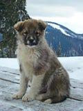 Filhote de cachorro no inverno Imagem de Stock