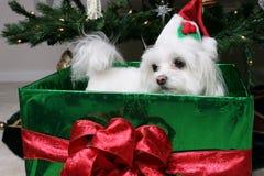 Filhote de cachorro no presente fotografia de stock royalty free