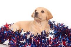 Filhote de cachorro no quarto de decorações de julho Imagens de Stock Royalty Free