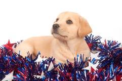 Filhote de cachorro no quarto de decorações de julho Foto de Stock