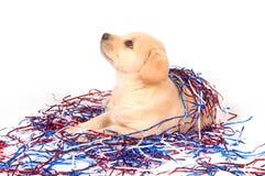 Filhote de cachorro no quarto de decorações de julho Imagens de Stock