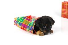 Filhote de cachorro no saco do presente Foto de Stock Royalty Free