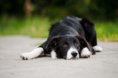 Filhote de cachorro novo border collie imagem de stock