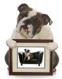 Filhote de cachorro novo cão crescido imagem de stock