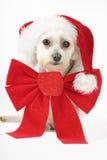 Filhote de cachorro para o Natal imagens de stock royalty free