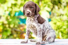 Filhote de cachorro pequeno Fotos de Stock