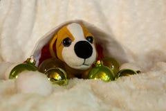 Filhote de cachorro pequeno Imagem de Stock