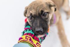 Filhote de cachorro pequeno na neve Fotografia de Stock Royalty Free