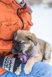 Filhote de cachorro pequeno na neve Imagem de Stock