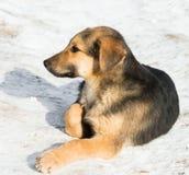 Filhote de cachorro pequeno na neve fotografia de stock