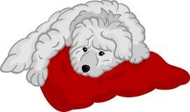 Filhote de cachorro pequeno que encontra-se na almofada Foto de Stock