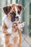 Filhote de cachorro pequeno triste fotografia de stock royalty free
