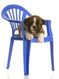 Filhote de cachorro que coloca na cadeira fotos de stock