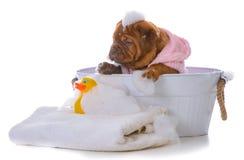 Filhote de cachorro que começ um banho Fotos de Stock