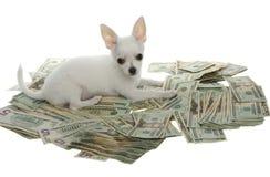 Filhote de cachorro que encontra-se em uma pilha de vinte contas de dólar Fotos de Stock Royalty Free