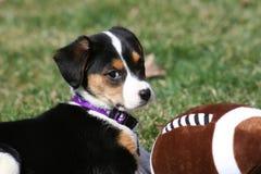 Filhote de cachorro que joga com futebol fotos de stock