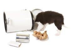 Filhote de cachorro que joga com lixo Fotografia de Stock