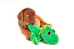 Filhote de cachorro que joga com um brinquedo fotografia de stock royalty free