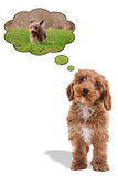 Filhote de cachorro que pensa sobre ir para uma caminhada Fotos de Stock Royalty Free
