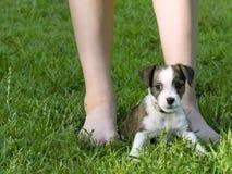Filhote de cachorro que senta-se nos pés da criança Fotos de Stock Royalty Free