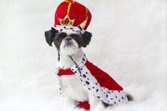 Filhote de cachorro real com coroa. Fotografia de Stock