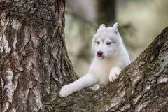 Filhote de cachorro Retrato na árvore em exterior fotos de stock royalty free