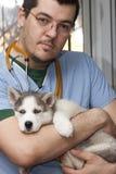 Filhote de cachorro ronco no veterinário fotografia de stock