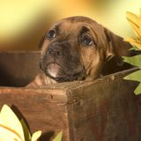 Filhote de cachorro Scared foto de stock
