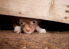 Filhote de cachorro sob uma cerca Imagens de Stock Royalty Free