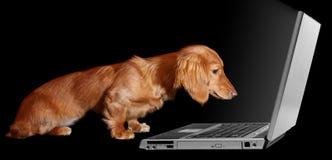 Filhote de cachorro surfando Imagens de Stock Royalty Free
