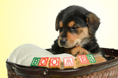 Filhote de cachorro Tired Imagem de Stock