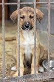 Filhote de cachorro travado na gaiola Imagens de Stock Royalty Free