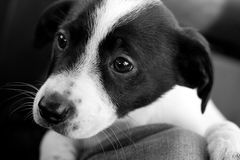 Filhote de cachorro triste Foto de Stock Royalty Free