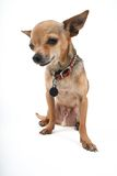 Filhote de cachorro triste fotografia de stock