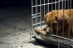 Filhote de cachorro triste na gaiola fotografia de stock royalty free