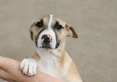 Filhote de cachorro triste que olha acima Fotografia de Stock Royalty Free
