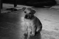 Filhote de cachorro triste sozinho Fotografia de Stock