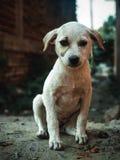Filhote de cachorro triste fotos de stock royalty free