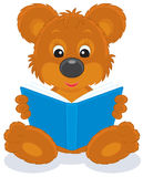 Filhote de urso de Brown que lê um livro Fotografia de Stock