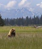 Filhote e montanhas de urso fotografia de stock