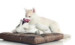 Filhotes de cachorro fotografia de stock