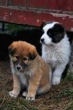 Filhotes de cachorro imagens de stock royalty free