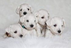 Filhotes de cachorro adoráveis Foto de Stock