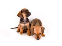 Filhotes de cachorro adoráveis imagens de stock royalty free