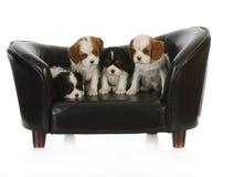 Filhotes de cachorro bonitos Imagem de Stock