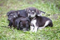 Filhotes de cachorro bonitos Fotos de Stock