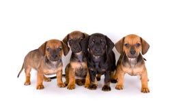 Filhotes de cachorro bonitos foto de stock royalty free